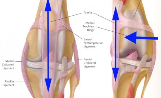 anatomy-knee-770x470[1]